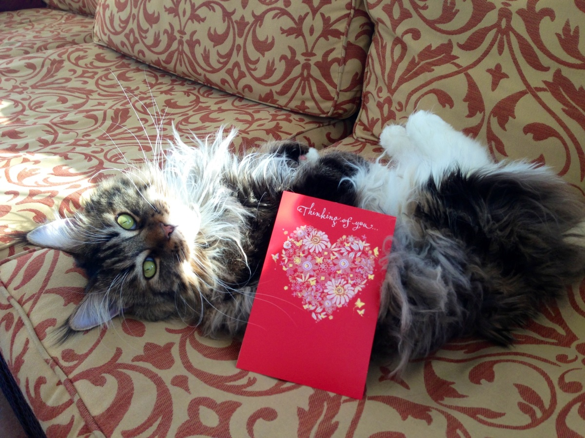 Best Wishes From A Cat: A Valentine's Day Poem- Submit Your Poem, too!